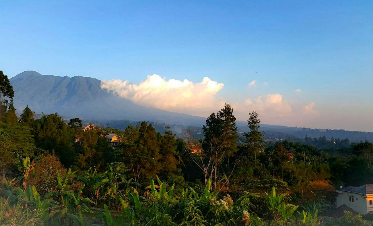 Trees See It Check This Out Hello World Taking Photos Eaya Sky INDONESIA