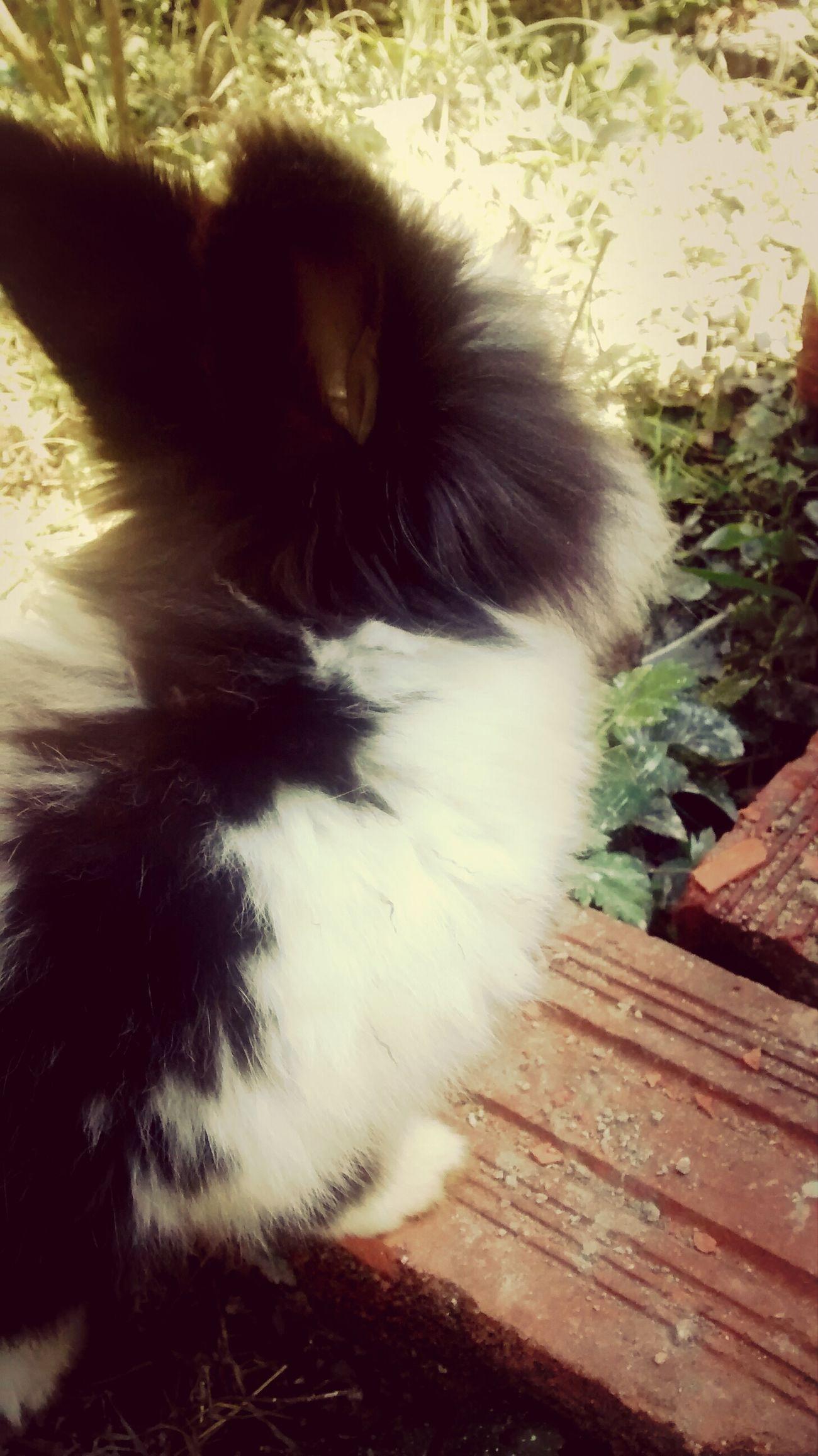 Ilovemypet Mybunny Cute Pets