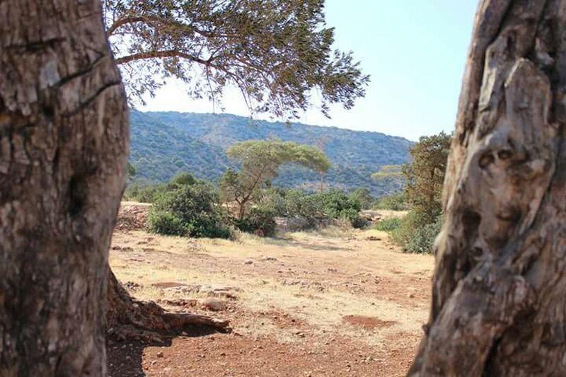 Nature الطبيعة الغابات الاشجار