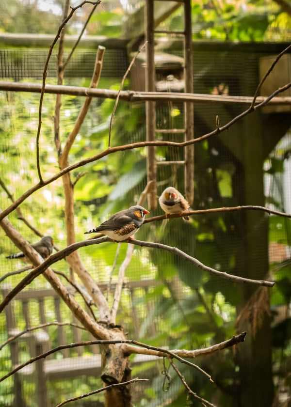 Bird Tree Animal Wildlife One Animal Animals In The Wild Branch Animal Themes No People Day Nature Perching Outdoors Beauty In Nature Mammal Zebra Finch Zebra Finches