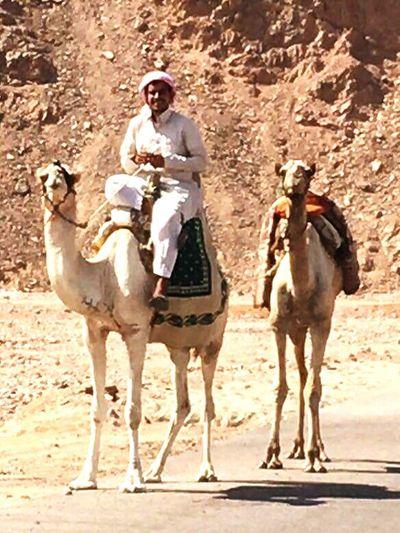 Camel Active Dahab Red Sea Dahab Beach Cameldriving