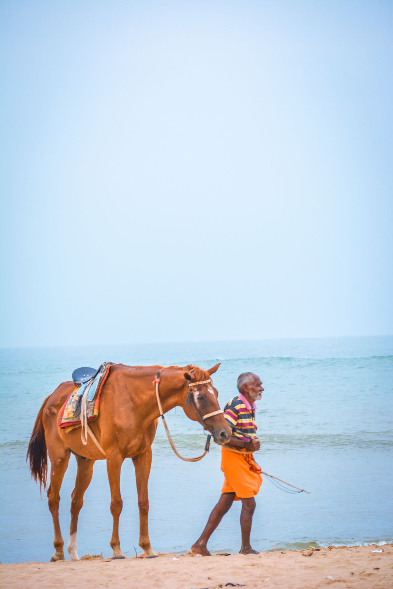 Beautiful stock photos of tiere, domestic animals, horse, sea, copy space