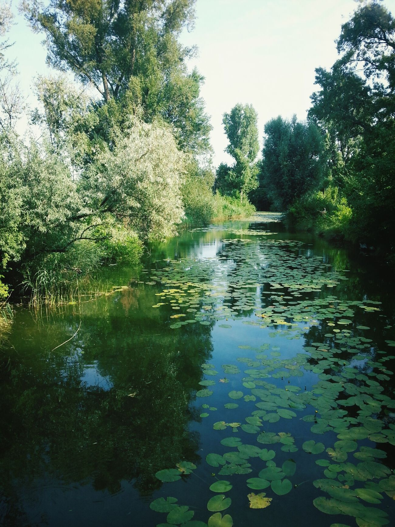 Alte Donau Beautiful Day