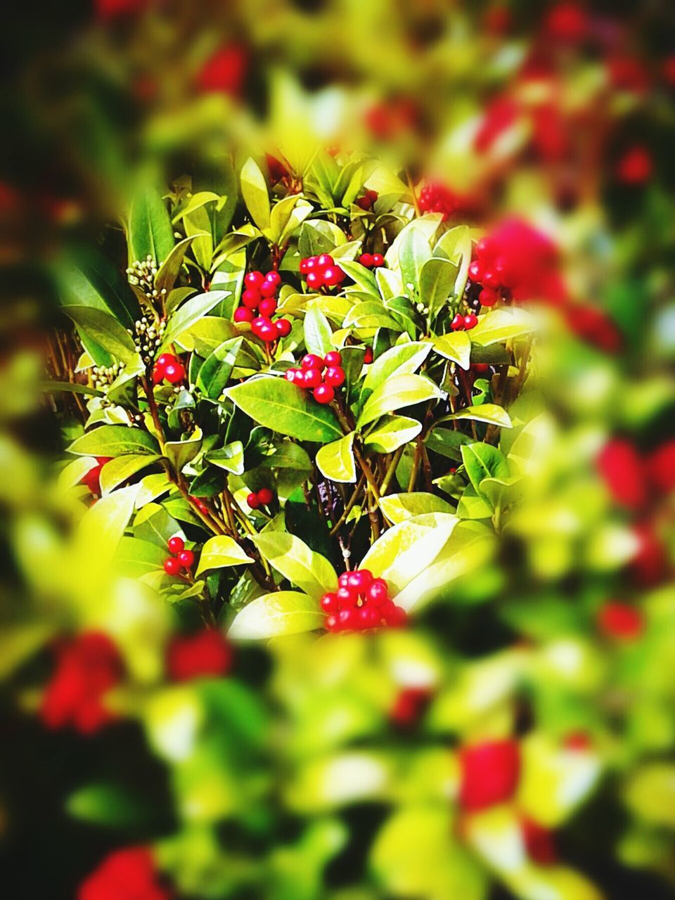 green color, red, growth, nature, selective focus, no people, beauty in nature, flower, plant, outdoors, day, focus on foreground, close-up, freshness, fragility, flower head