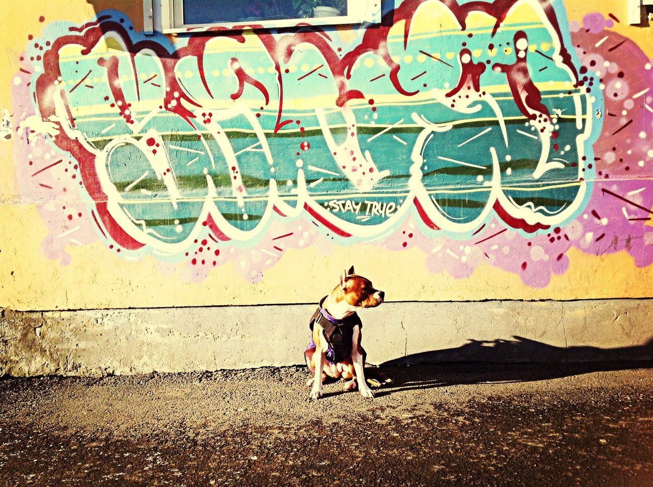 Lana Parkour Dog