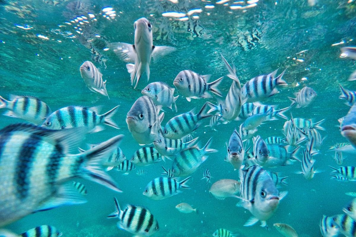 The Great Outdoors With Adobe this must be underwater love. Snorkling Sea Fish Swimming Travel ASIA INDONESIA Lovina