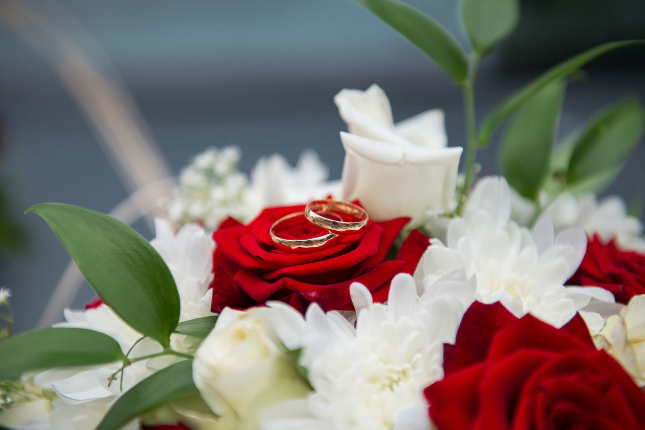 Beautiful stock photos of valentinstag,  Beauty In Nature,  Celebration,  Close-Up,  Day