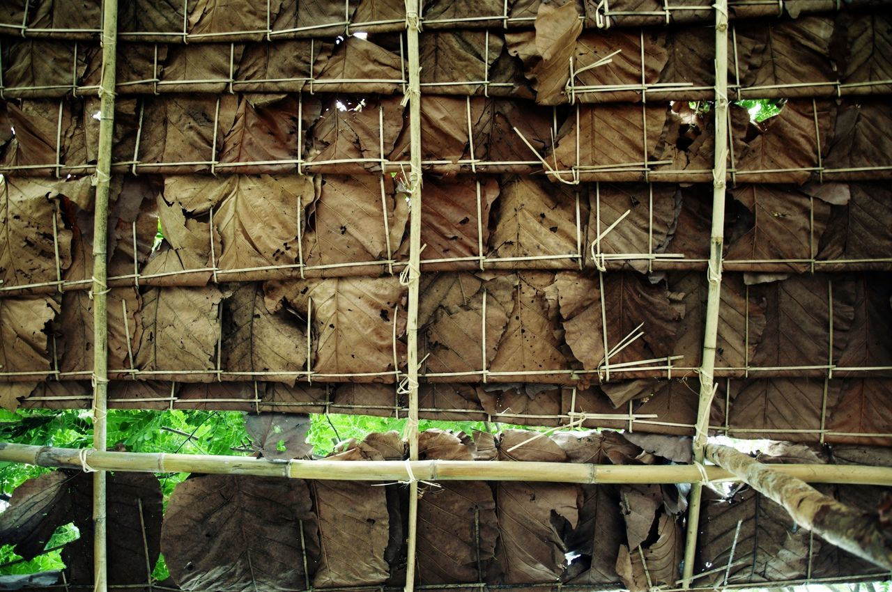 Roof X Architecture Built Structure Cage Cheap Room Human Made Leaves🌿 Nature Roof Handmade Run-down