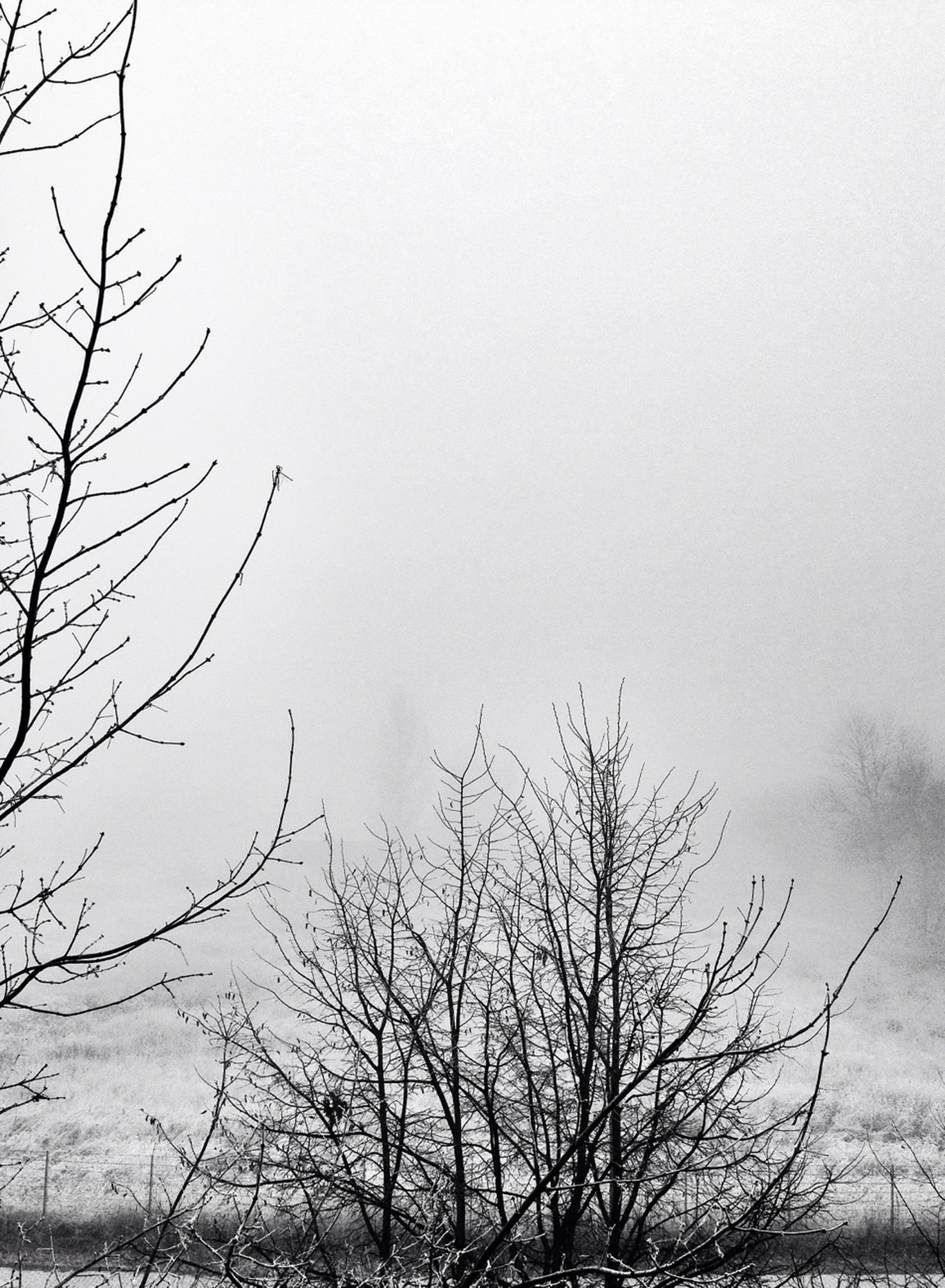 bare tree, branch, tree, clear sky, tranquility, low angle view, copy space, nature, beauty in nature, scenics, weather, tranquil scene, winter, cold temperature, sky, outdoors, no people, day, season