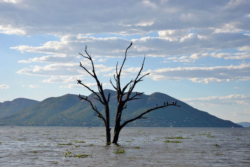Tree in water Nature Sky Mountain Scenics No People Outdoors Landscape Tranquility Beauty In Nature Day Plant Bare Tree Water Branch South Africa Hartbeespoort Dam Meerhof Hartebeespoort Meerhofskool