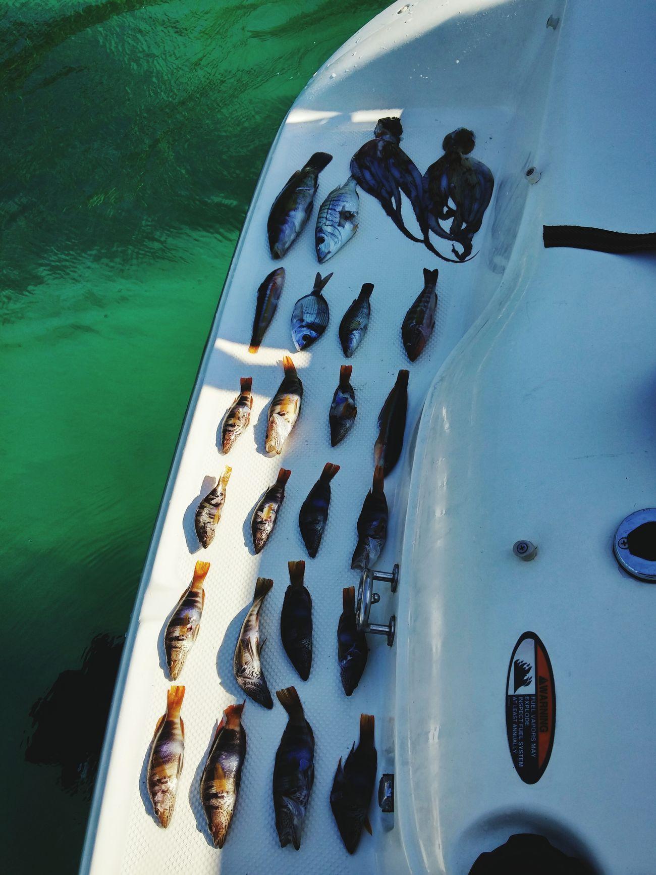 Spearfishing Spearfish Fishing Fishing Time Greenwater Greece GREECE ♥♥ Kavala @ Kavala In Greece