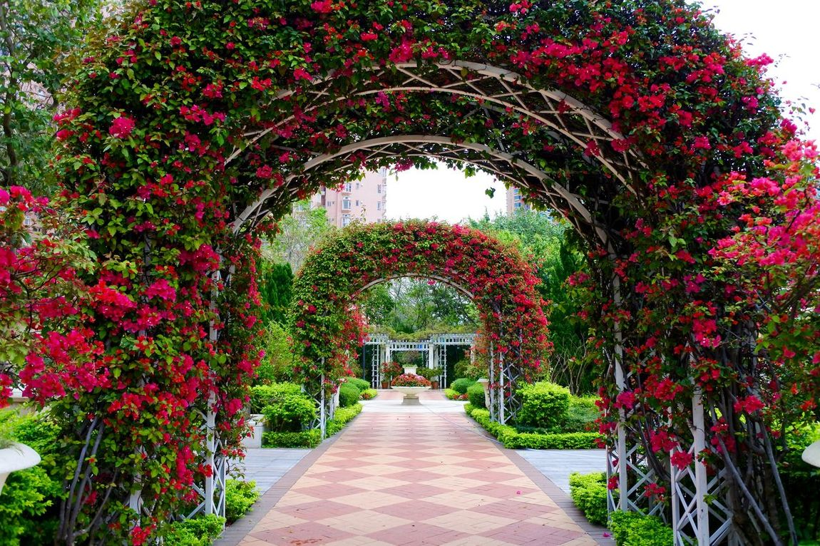 Arch Arches Architecture Archway Built Structure Diminishing Perspective Dreamy EyeEm Best Shots Flower Flowers Flowers On Arch Footpath Formal Garden Garden Architecture Garden Structure Growth Idyllic Nature Park - Man Made Space Peace Red Red Flower Petal Red Flowers Showcase April The Way Forward The Secret Spaces Art Is Everywhere