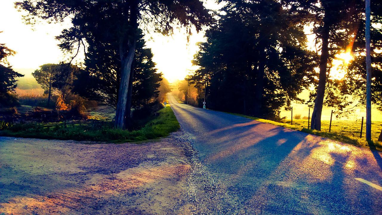 A procura de liberdade Tree Beauty In Nature Nature Sky Day Sunshine Live Photography Life Thanks God Placeinthe_sun Sun Namaste ❤ Goodvibe Tranquility Amazing Freedom