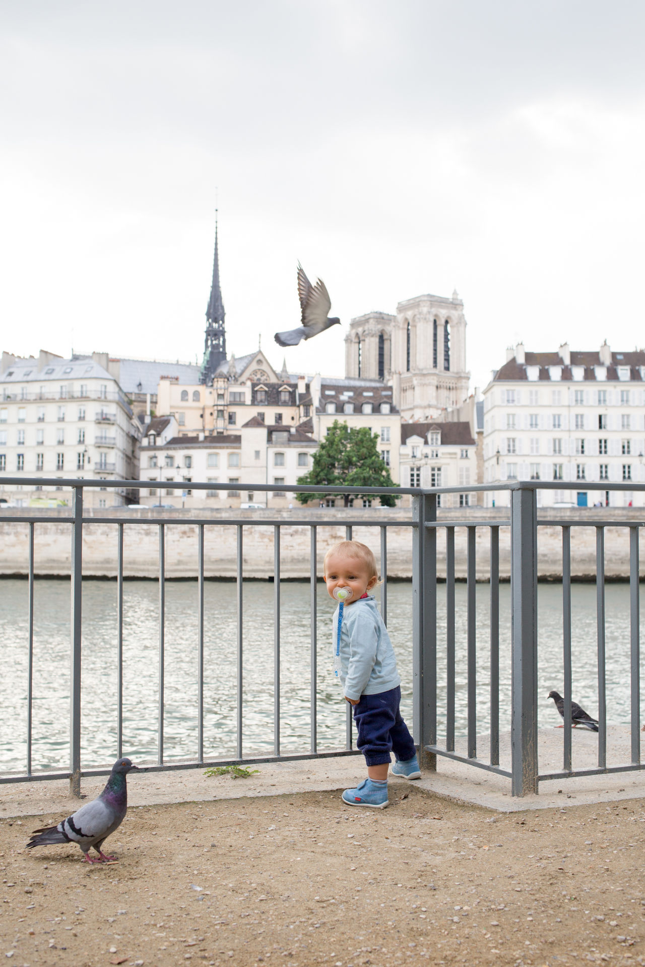 Beautiful stock photos of notre dame,  6-11 Months,  Animal Wildlife,  Animals In The Wild,  Architecture