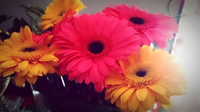 Fiore Aleleyva Flor Fiore🌼🌻🌺 Flores Florecitas