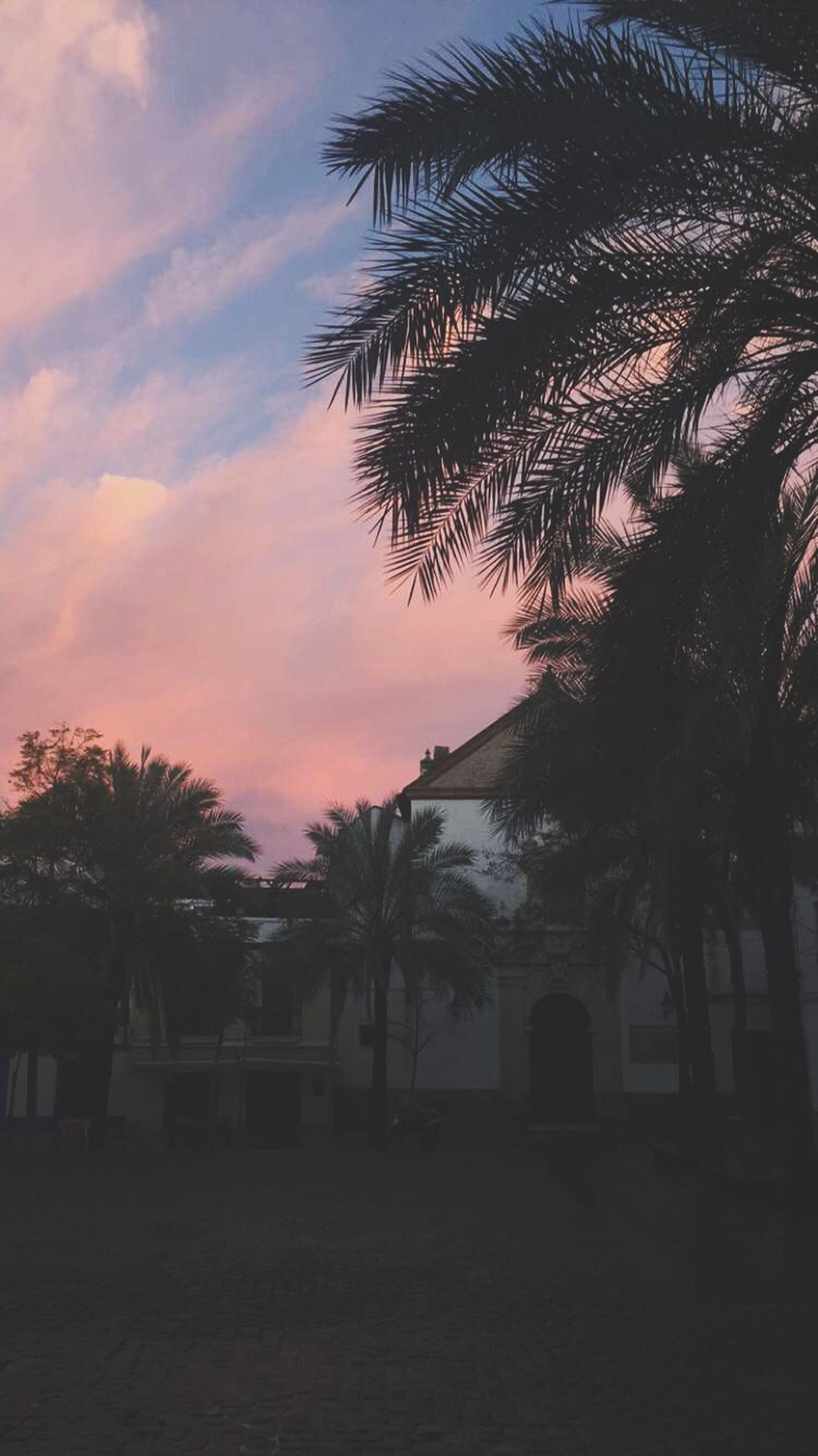 palm tree, tree, sunset, sky, built structure, architecture, building exterior, silhouette, tranquility, growth, cloud - sky, nature, beauty in nature, tranquil scene, scenics, orange color, house, outdoors, cloud, no people