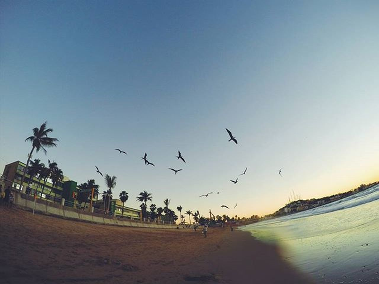 Take me back to my vacation! ! 🌞 In this picture we encountered a man who was walking around with a stick and all these birds would just follow him as if he was some kinda master splinter lol pretty awesome though! Gopro Goprohero4 Mazatlan Mexico VSCO Vacation Exploring 2016 Beach Gopromx Birdmaster TBT