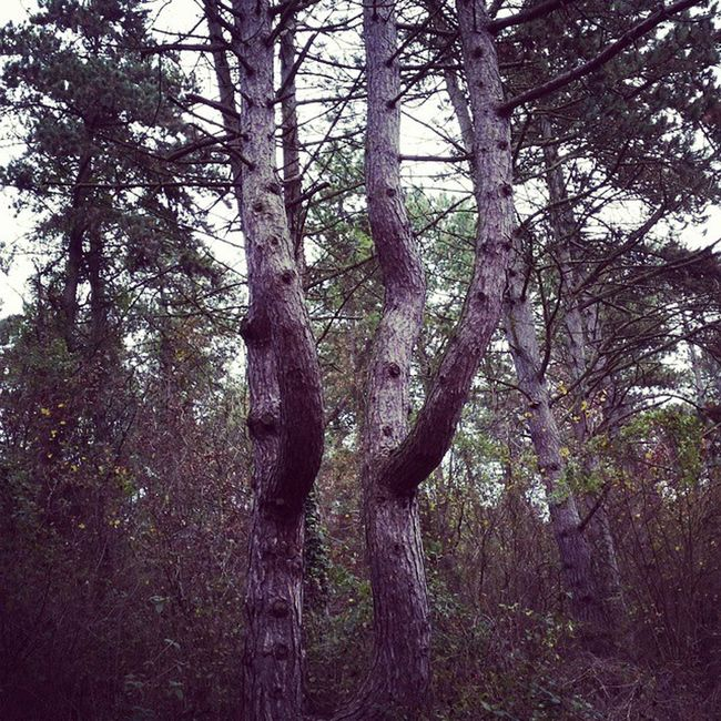 Tree Arbre Branchesjumelles