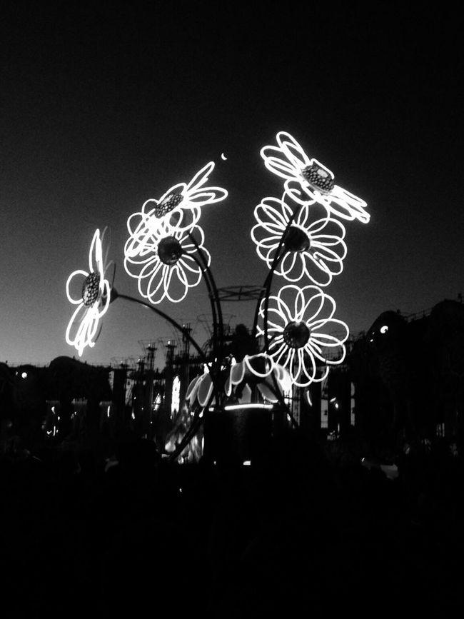 Electric Daisy Carnival EDC Daisy's Edm B&w B&w Photography