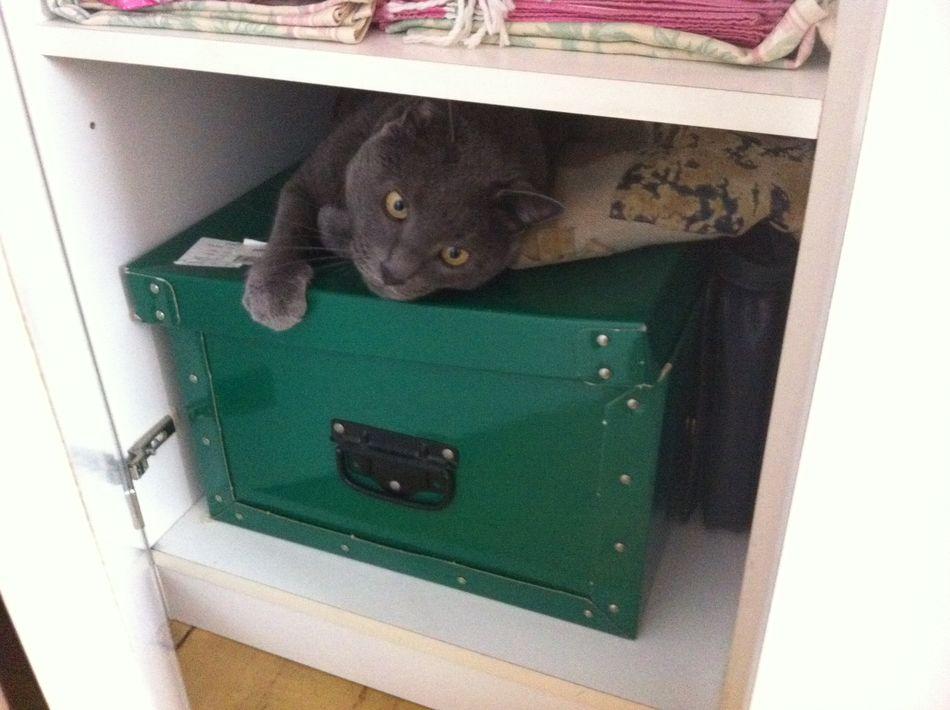 Petite cachette Chat Cat Mon Chat ♡ Cat Lovers Cache-cache Cats Mon Ami Le Chat Animals Chat Gris