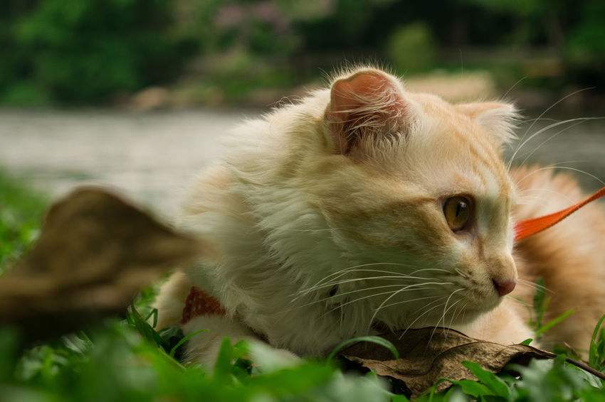 Cute Pets Animal Themes Cat Close-up Domestic Cat Lovely Cat Nature One Animal Outdoors Pets