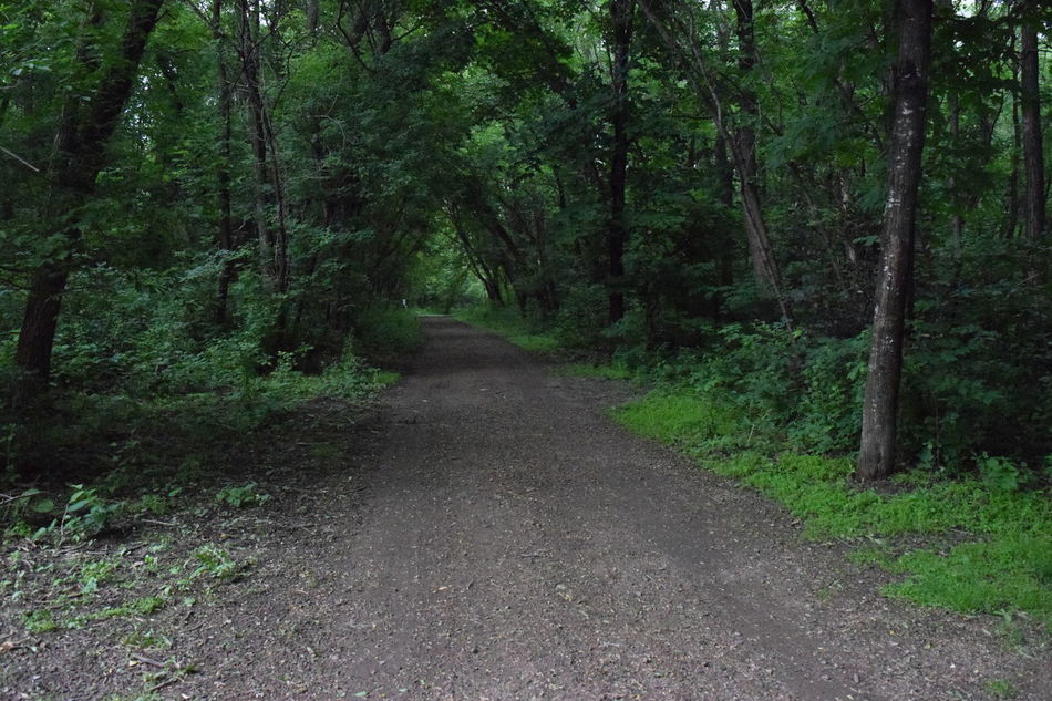 Green Path Gravel Road Bike Path Branches Forest Fresh Grave Leaves Light At The End Of The Tunnel Minnesota New Places Outdoors Park Park Trail Pattern Road Summer Trail Trees Walking Trail Woods