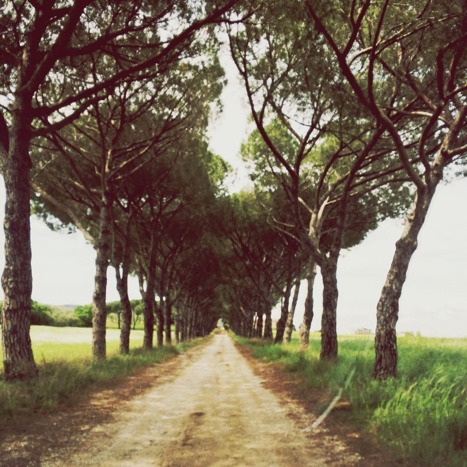 Drive Way Holiday Tuscany Tuscany Countryside Agro Turismo Tree Nature Grass Tranquility Treelined Outdoors The Way Forward Day No People Tranquil Scene Growth Landscape Beauty In Nature Scenics Sky (null)Italy