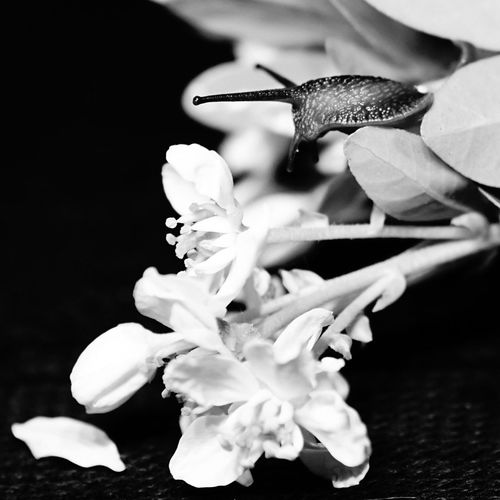 Black and White image of Flowers And A Snail with lighting