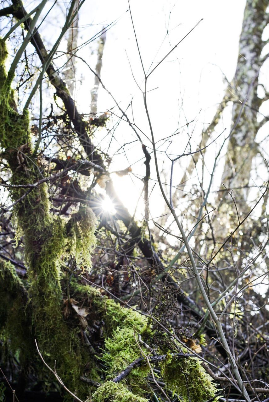 tree, nature, growth, day, no people, tranquility, branch, beauty in nature, outdoors, forest, low angle view, scenics, close-up, sky