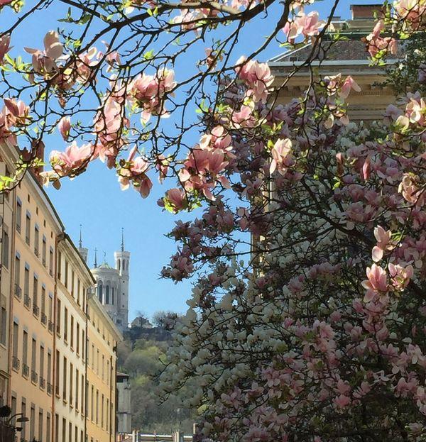Spring Into Spring Fourvière  Lyon Eyelyon Only Lyon Printemps Frühling Spring Flowers City Life