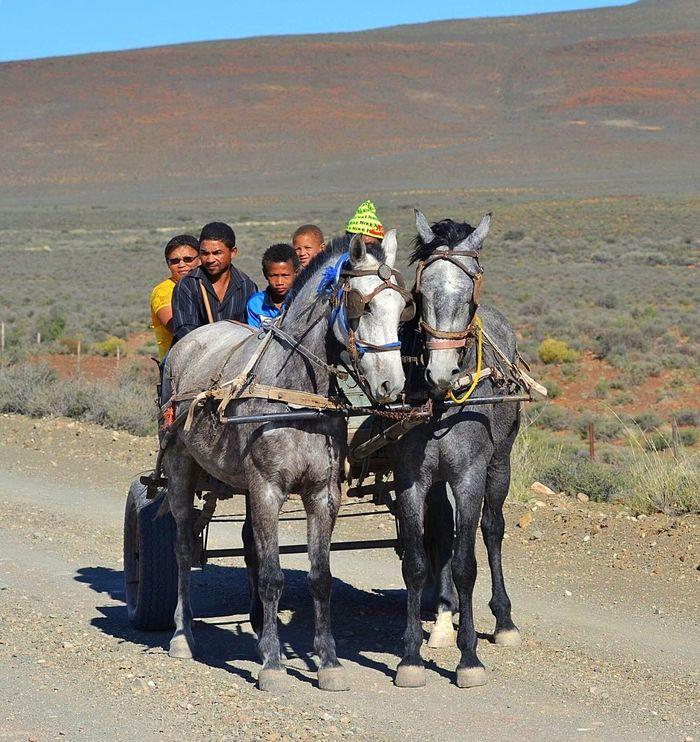 Karooheartland Karoo Space Dirt Roads Gravel Road DonkeyCart Donkeylove Afrikaans Family Drive