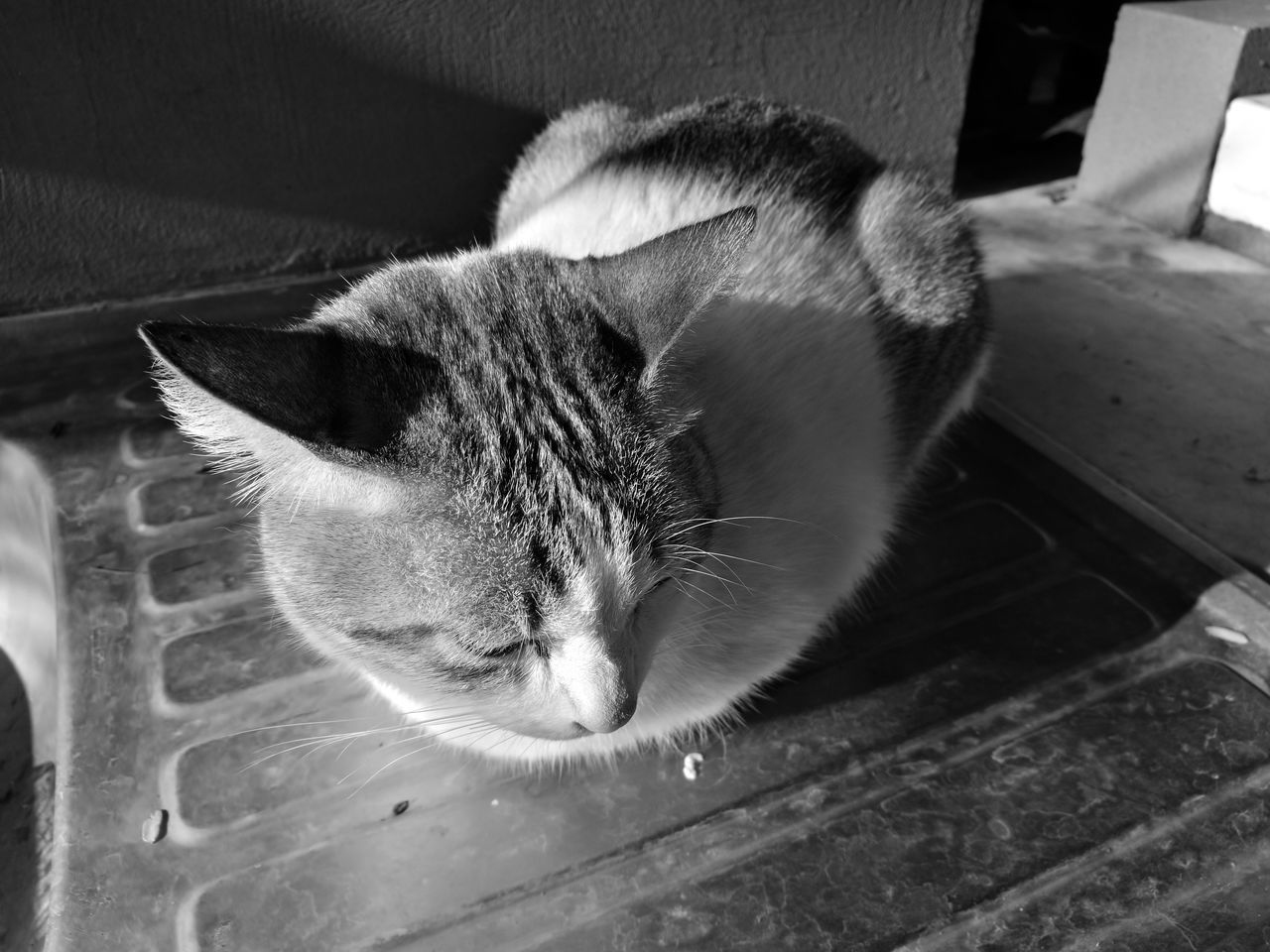 domestic cat, domestic animals, animal themes, pets, one animal, feline, mammal, cat, indoors, no people, whisker, close-up, day