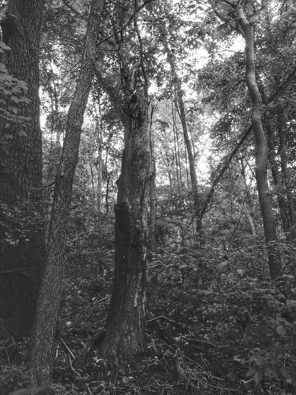 View Of Tree In Forest