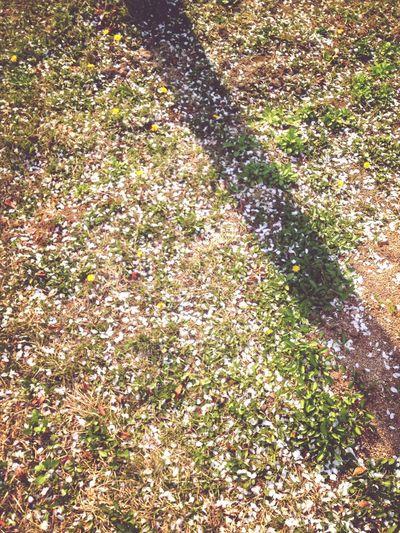 Spring 봄바닥'