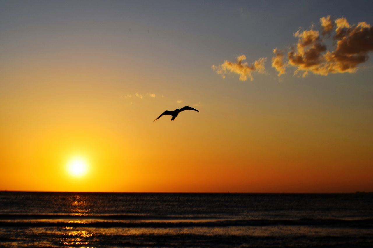 sunset, sea, beauty in nature, nature, scenics, silhouette, sky, flying, horizon over water, tranquil scene, water, bird, tranquility, sun, animals in the wild, mid-air, outdoors, no people, animal themes, spread wings