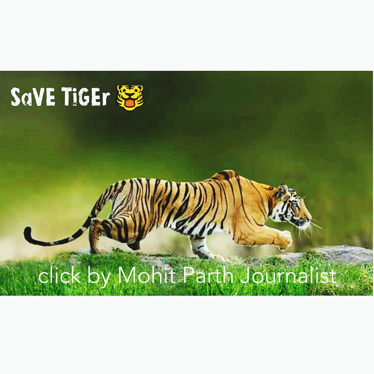 save tigers 🐯.... request to all people's... 👏 Tigers Relaxing Taking Photos Hi! EyeEm Best Shots Android Skyporn Multi-media JournalistJournalists Neha  Picture To Save Tigers