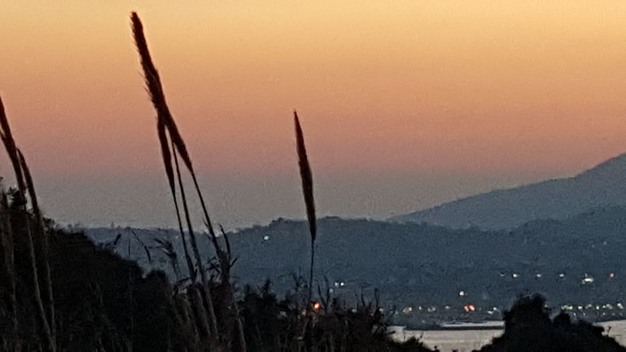 Sunset Tree Nature Sky No People Outdoors Landscape Beauty In Nature Scenics Sea And Sky Napoli ❤ Napoli Sea Water Tranquil Scene Landscape_photography