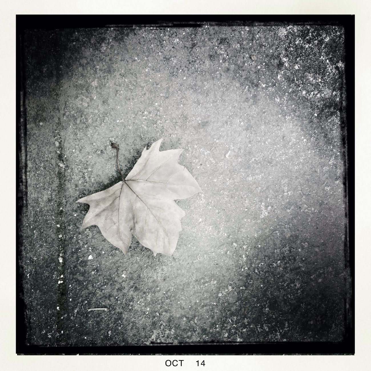 Otoño. Walking Around The City  NEM Black&white