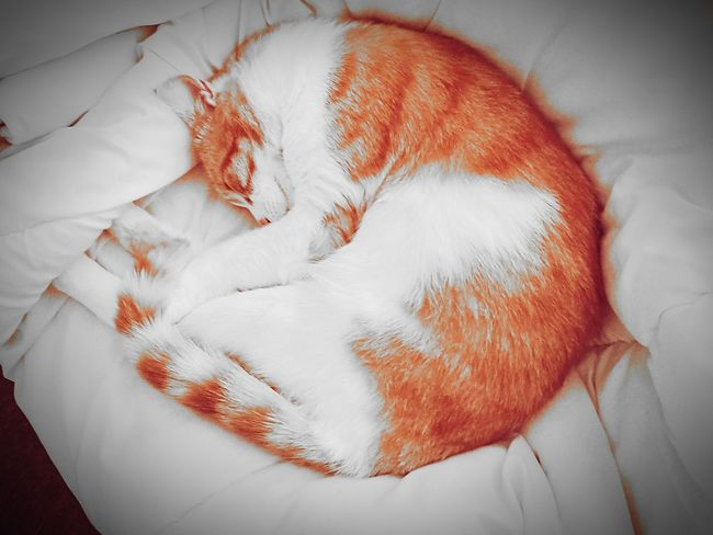 TigerCat Cat Cat Lovers Cats Of EyeEm Sleepingcat Bestoftheday Best EyeEm Shot BestEyeEmedits Indoors  HuaweiP9Photography Animal Themes HuaweiP9 Mammal One Animal EyeEm Nature Lover Nightcreature Stilllearning