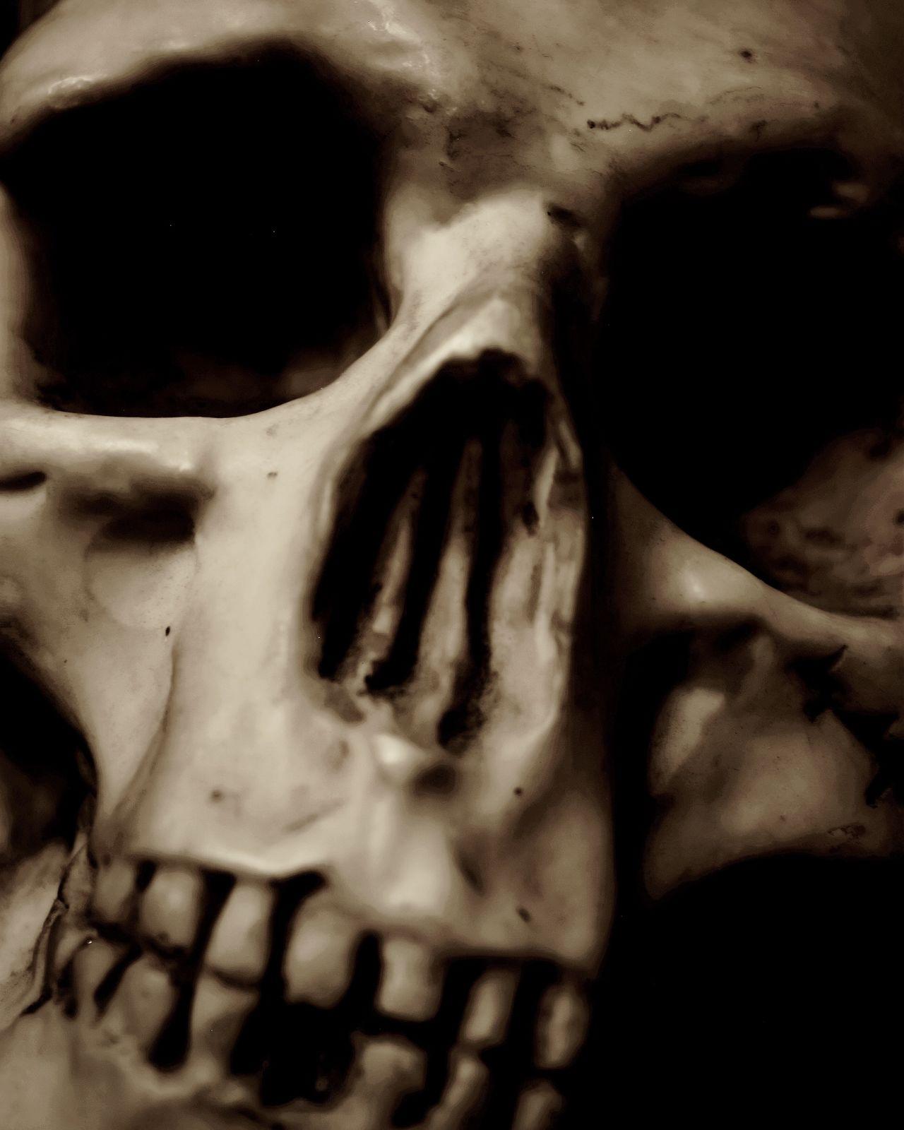 Skull Human Body Part Spooky Horror Human Skull Human Bone Human Skeleton Close-up People Death Macabre Art Blackandwhite Occult Fear Alchemy Anatomy HEAD Cranium