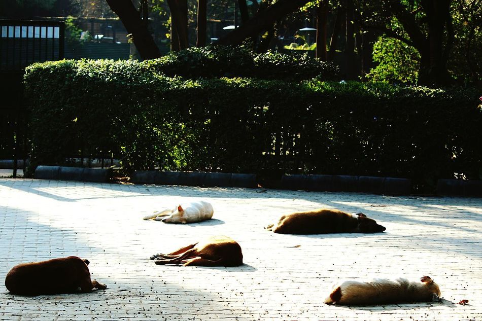 Dogsleeping Animal Themes All Together !!! Guarding The Garden Outdoors No People Day Backgrounds Themes ........¤↑↓♧♣★☆→←↓↑◀▶▼▲