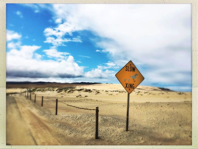Bird Crossing. Check This Out Sand Dune Sand Beach Sand Dunescape Dunes Outdoor Photography Nature Photography Nature_collection Besutiful Nature Taking Photos IPhoneography California Coast Shore