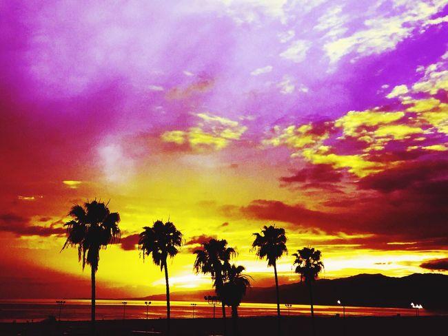 EyeEm Beach Sunset Santa Monica Eyeem Beach Shots California Venicelife Check This Out Photography Colorsofthesky Beachphotography Beach Photography Palm Trees Serenity