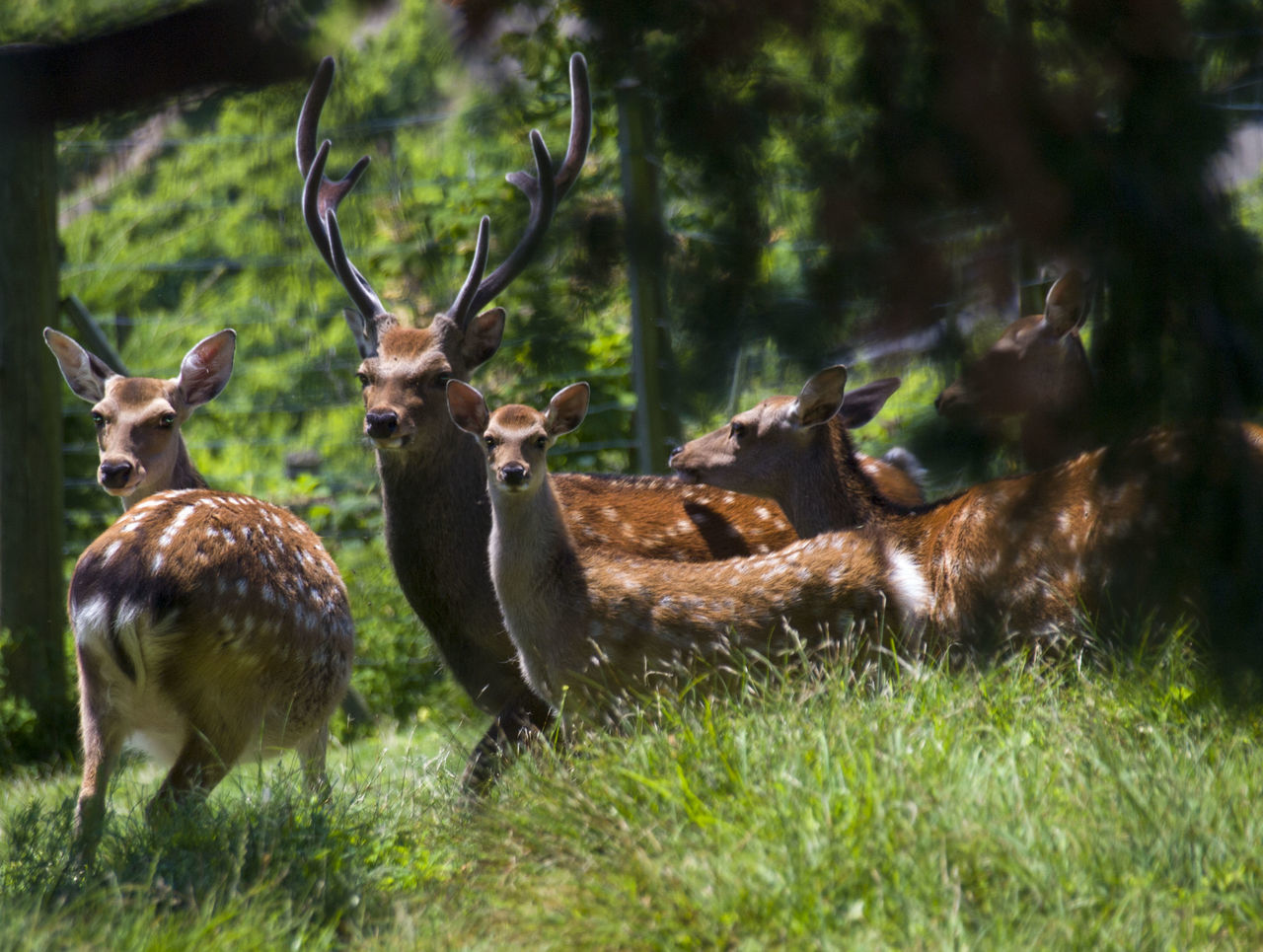 Beautiful stock photos of deer, Animal Family, Animal Themes, Animals In The Wild, Beauty In Nature