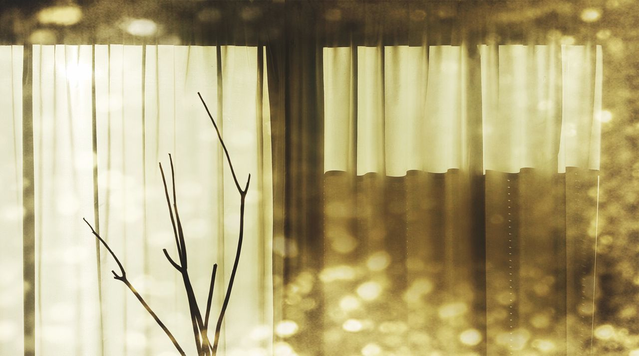 Window Curtain Sunlight Light Bokeh Still Life Plant Living Room Lifestyles Nature Photography Day Daylight No People Sunset Tranquility Silence Capture The Moment Indoors  Beauty Directly Above Silhouette Golden Golden Moment Golden Light