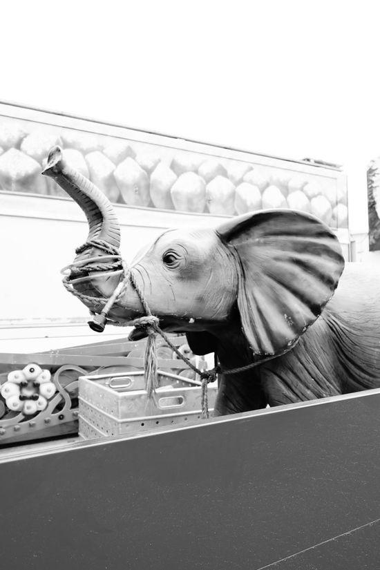Beauty In Nature Domestic Animals Elefant Kirmes Outside Transportation Truck