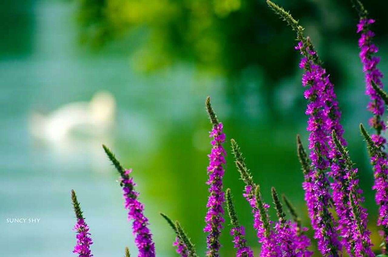 growth, flower, nature, insect, plant, one animal, purple, fragility, beauty in nature, animals in the wild, focus on foreground, day, animal themes, outdoors, animal wildlife, green color, no people, freshness, close-up, buzzing, flower head