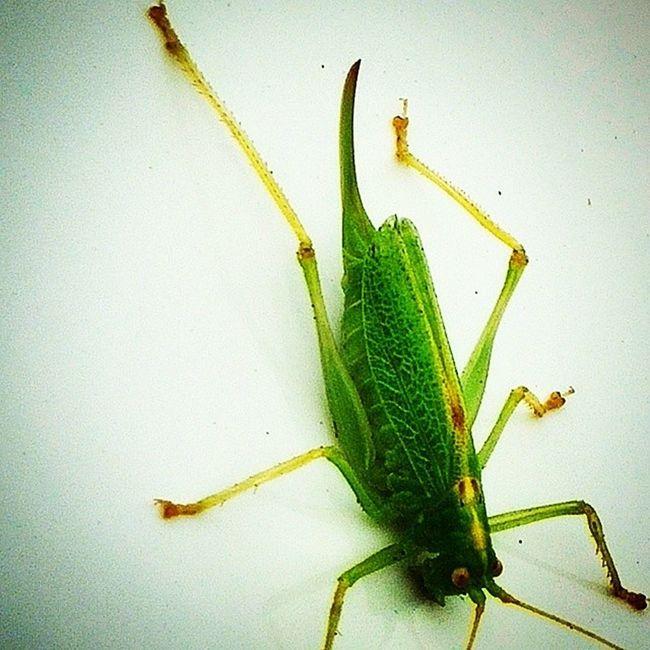Found this guy on my car Green Bug Greenbug Alienbug Wtfisthis