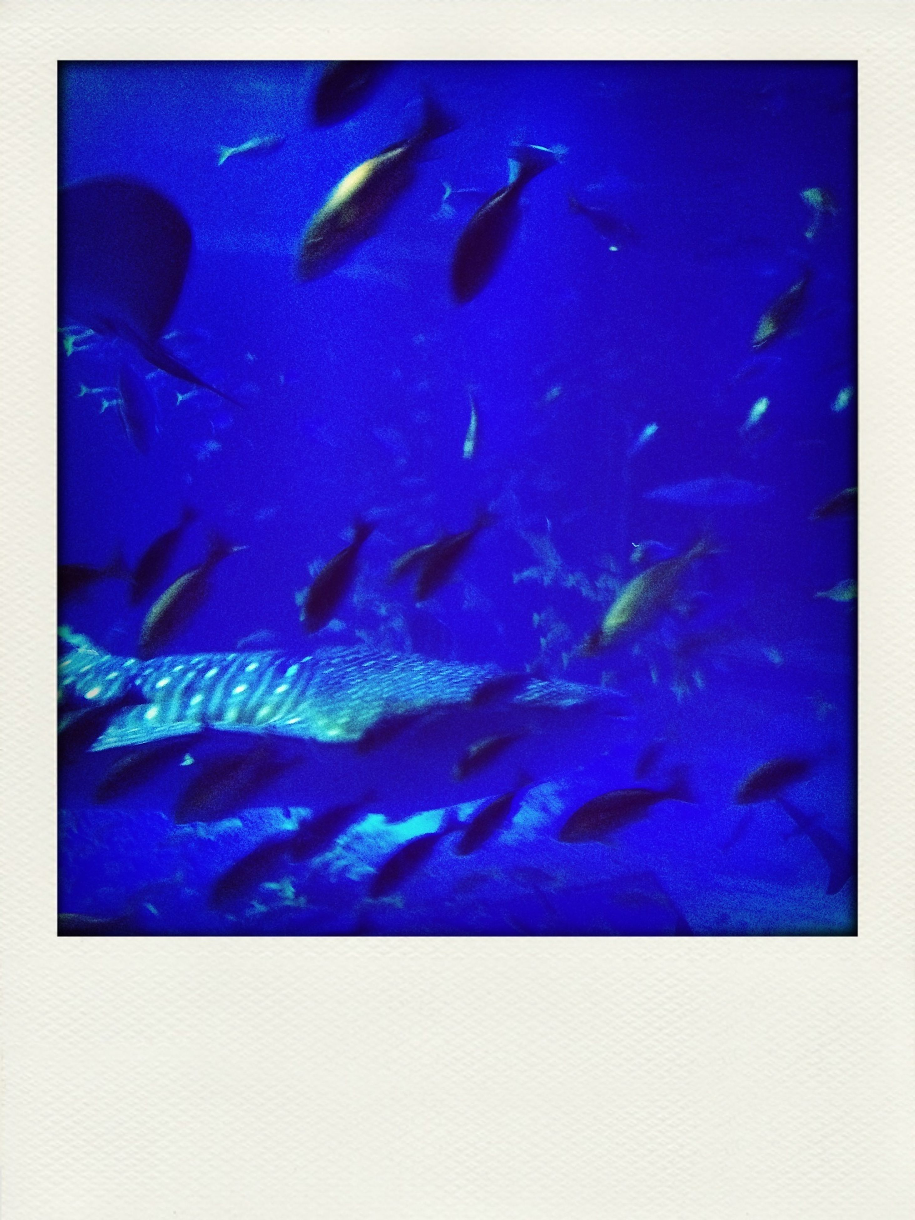 animal themes, underwater, wildlife, animals in the wild, blue, sea life, swimming, fish, undersea, transfer print, school of fish, auto post production filter, indoors, water, aquarium, full frame, backgrounds, medium group of animals, nature