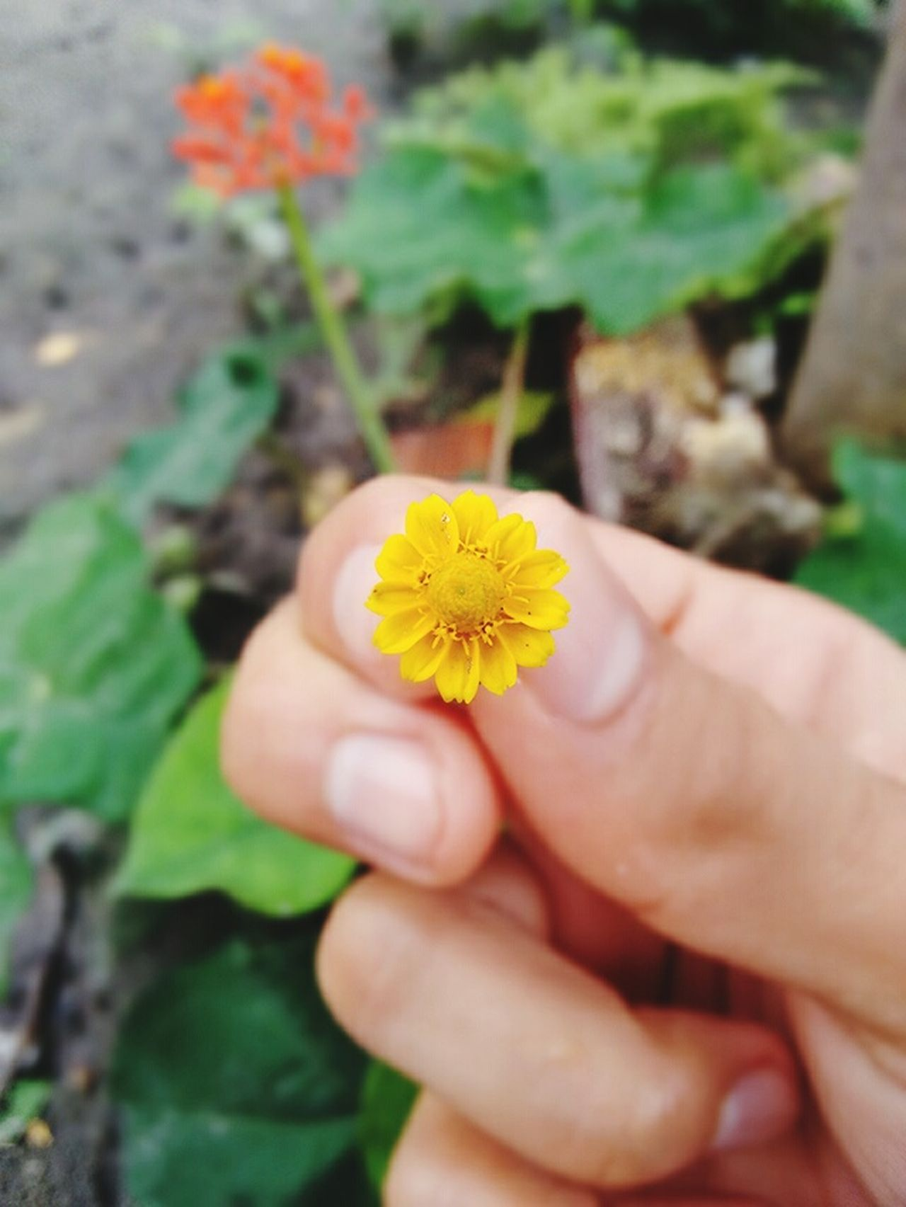 Flower Nature Yellow Beauty In Nature Day Biologistsperspective Nature Summer Planet Hello World Biology New Life Follower Nature_collection Nice Biologylab Beautiful Life In Colors Brazil